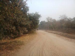 chichawatni jungle